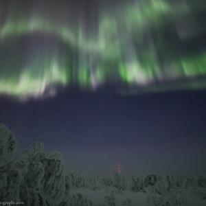 Aurora above the Frozen Trees in Inari in Finland
