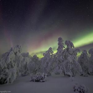 Northern Lights and Frozen Trees in Saariselkä in Lapland