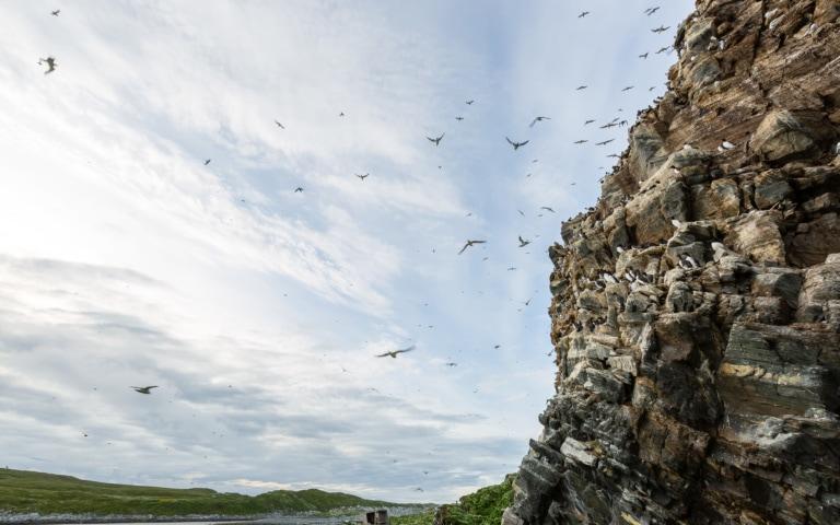 Hornoya Island Bird Cliff in Norway