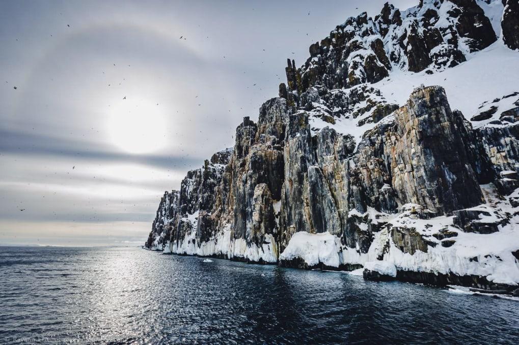 Sailing along the Alkefjellet bird cliff