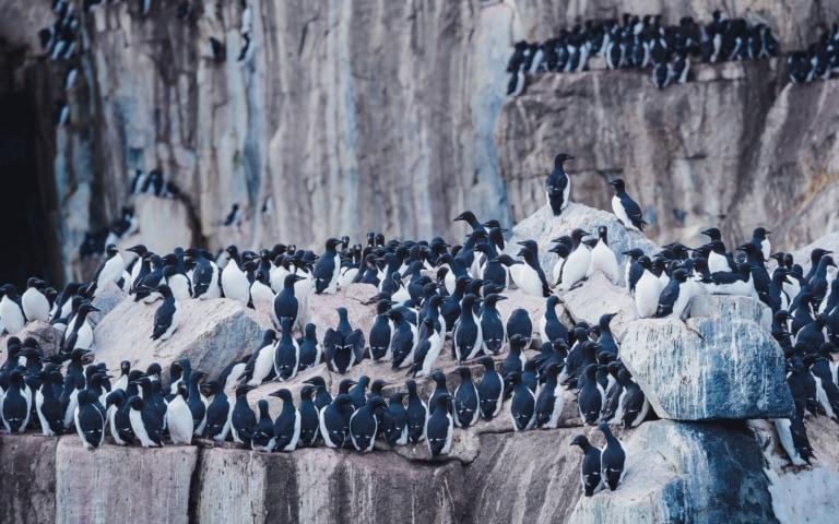 Alkefjellet bird cliff in Svalbard