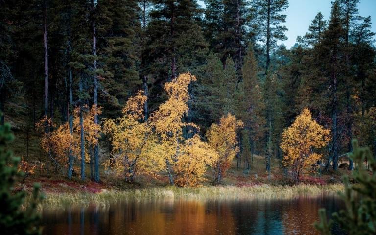 L'automne en Laponie est ma nouvelle saison préférée