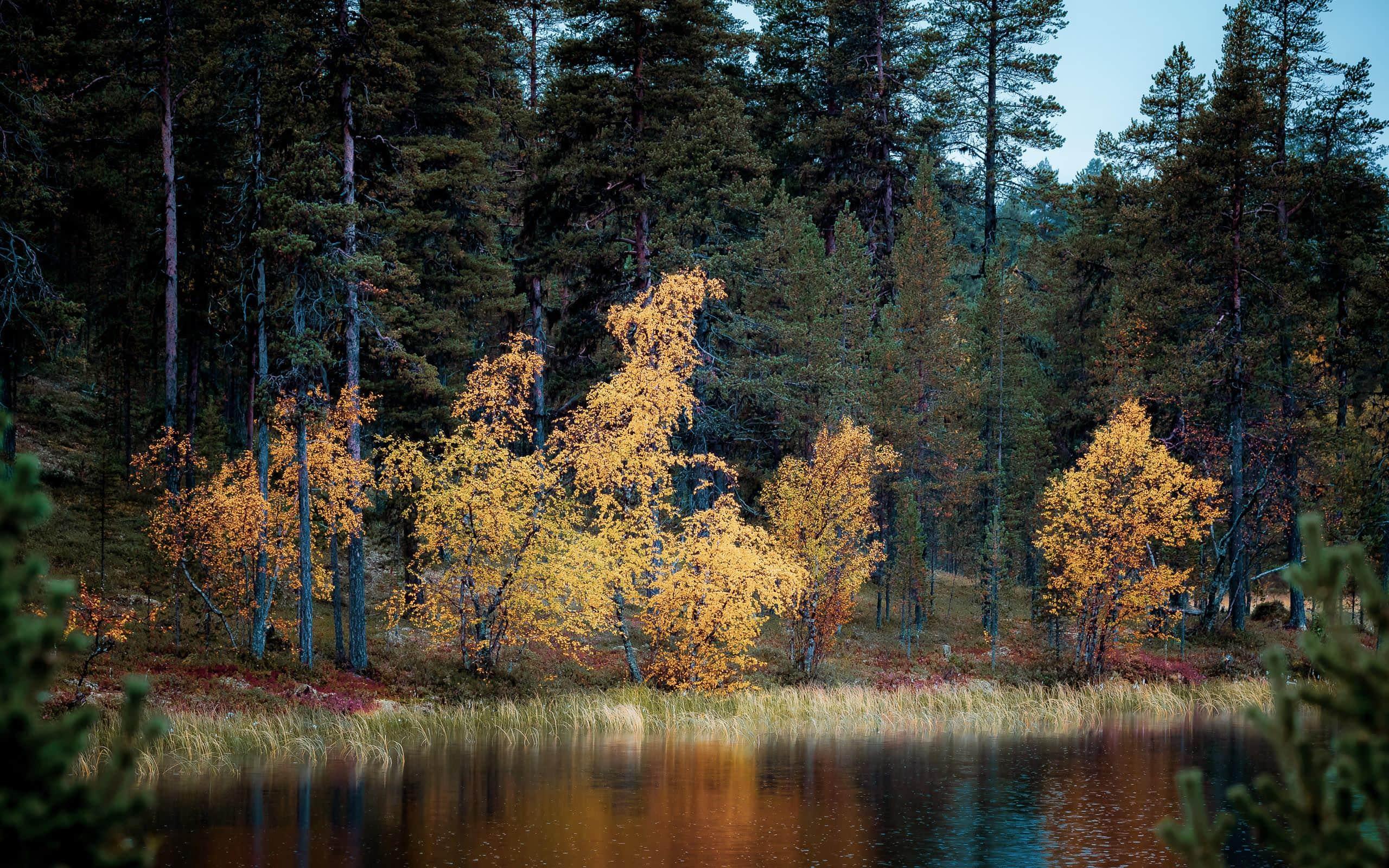rencontre automne rivière ma Logan Lerman Dating histoire