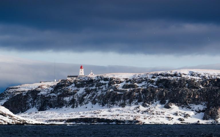 Observation ornithologique au printemps sur Hornøya
