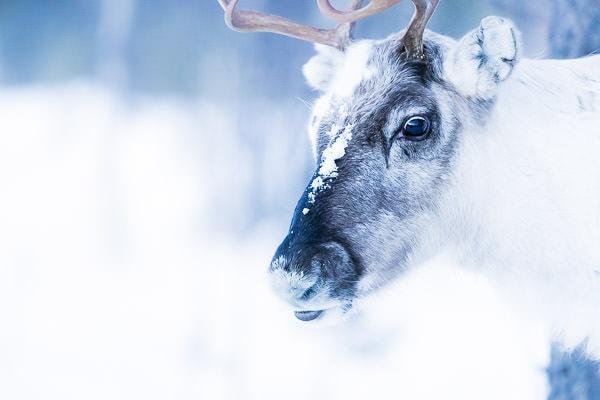Polar Night and Aurora - Utsjoki (Lapland) - January 2020