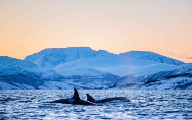 Voyage Photos Orques et Aurores Boréales en Norvège – Tromsø (Norvège) – 25 janv. – 1er févr. 2022